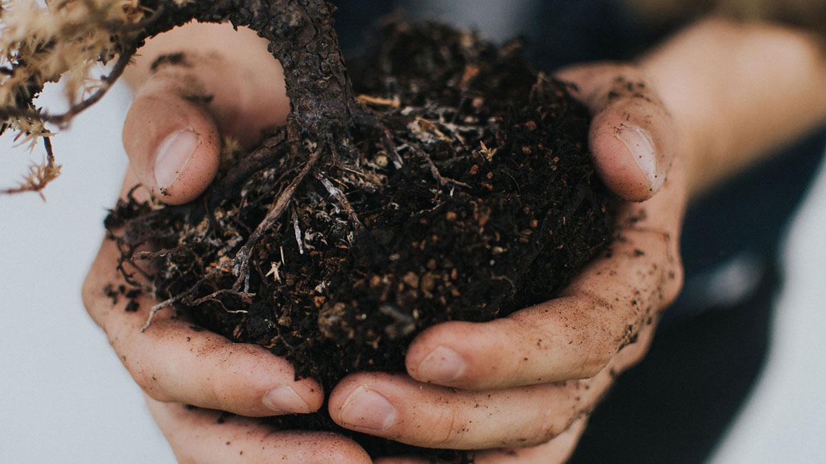 Handful of Topsoil